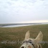 south dakota cowgirl photography, palomino horse, iphone photo, missouri river