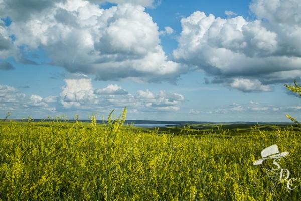 tutorial, photography tutorial, south dakota cowgirl photography, sweet clover, the missouri river, south dakota landscapes