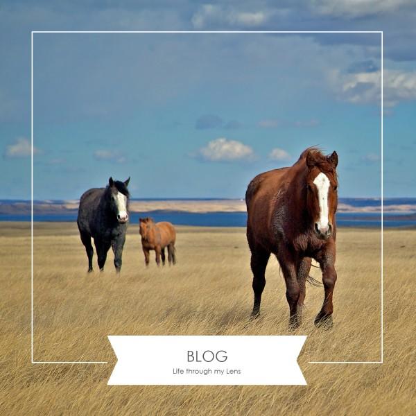 The blog of the South Dakota,