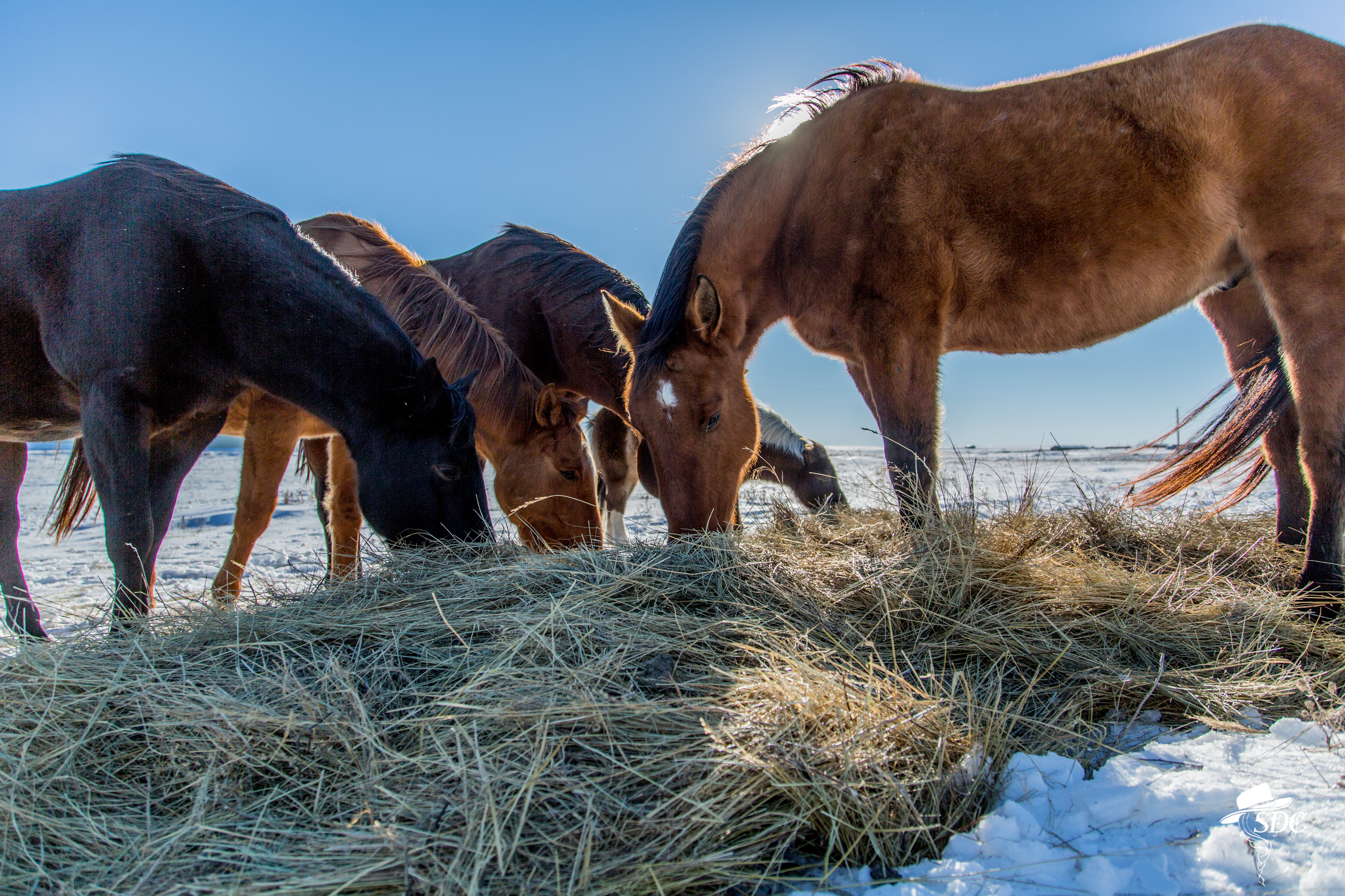 Patience is key, horses in sunshine, winter, snow, the south dakota cowgirl